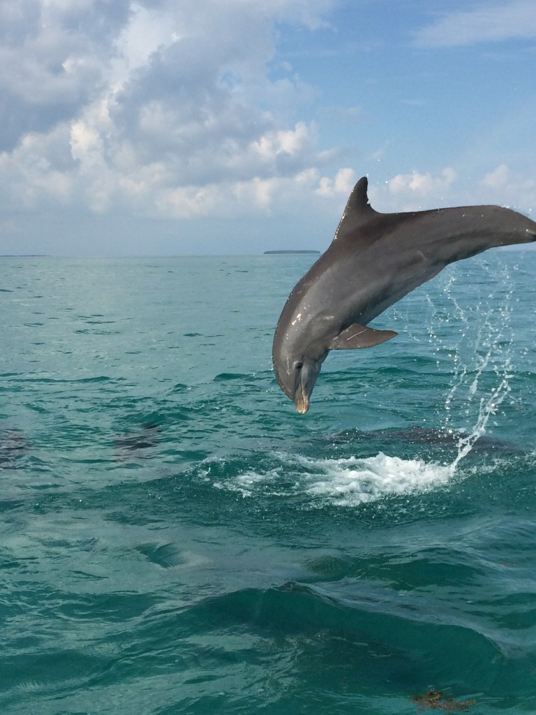 Image Result For Dolphin Boating