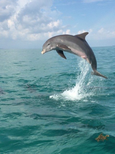 Dolphin jumping in the air
